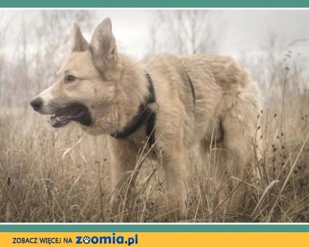 1 5 roczny  średni 18 kg  do domu z ogródkiem  pies FIGARO_Adopcja