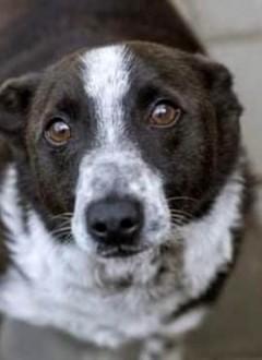 Drakuś, zrównoważony, fajny psiak szuka domu!