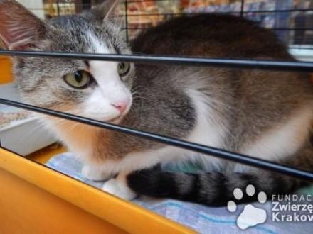 Betty przemiła koteczka   małopolskie Kraków