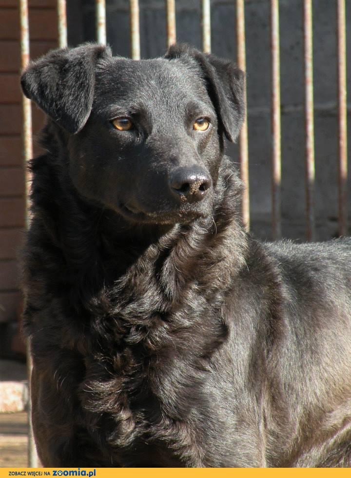 Tarzan, domowy psiak szuka kochającego domu!