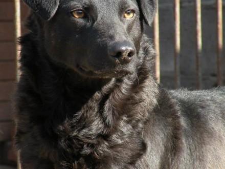 Tarzan  domowy psiak szuka kochającego domu!
