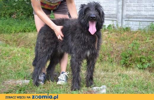Bruner - piękny psiak który za kratami całkiem stracił blask :(,  mazowieckie Warszawa