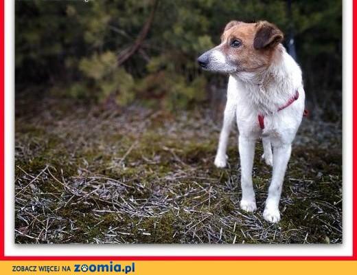 Rodzinny psiak,spokojny,łagodny,szczepiony,średni 13 kg, BODY.Adopcja.,  łódzkie Łódź