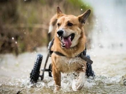 TOFFIK - bardzo fajny i radosny pies :) zabierz go do domu jeśli tylko chcesz !   dolnośląskie Wrocław