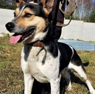Agat - młodziutki  kochany  łagodny psiak szuka domu