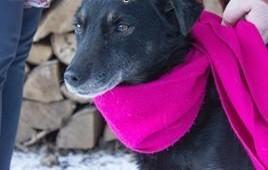 FART prosi o własny domSpokojny  stateczny pies   lubelskie Lublin