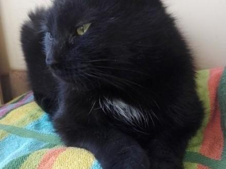 Emi - cudowna kotka czeka na odpowiedzialną rodzinę