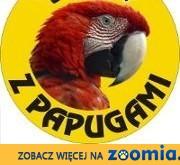 Największy wybór papug,  mazowieckie Warszawa
