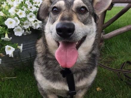 Jamor - rezolutny  młody psiak szuka spokojnego domu!