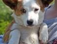 Młodziutka MIKROSUNIA Fionka, 6 kg cudownej istotki do adopcji!