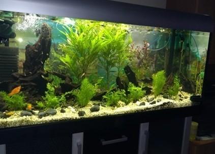 Sprzedam akwarium 360 litrów z pokrywą i oświetleniem + 1 mniejsze z akcesoriami