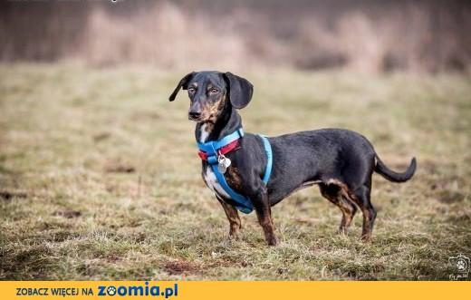 Kto Kulkę adoptuje, moc psiej miłosci poczuje,  mazowieckie Warszawa
