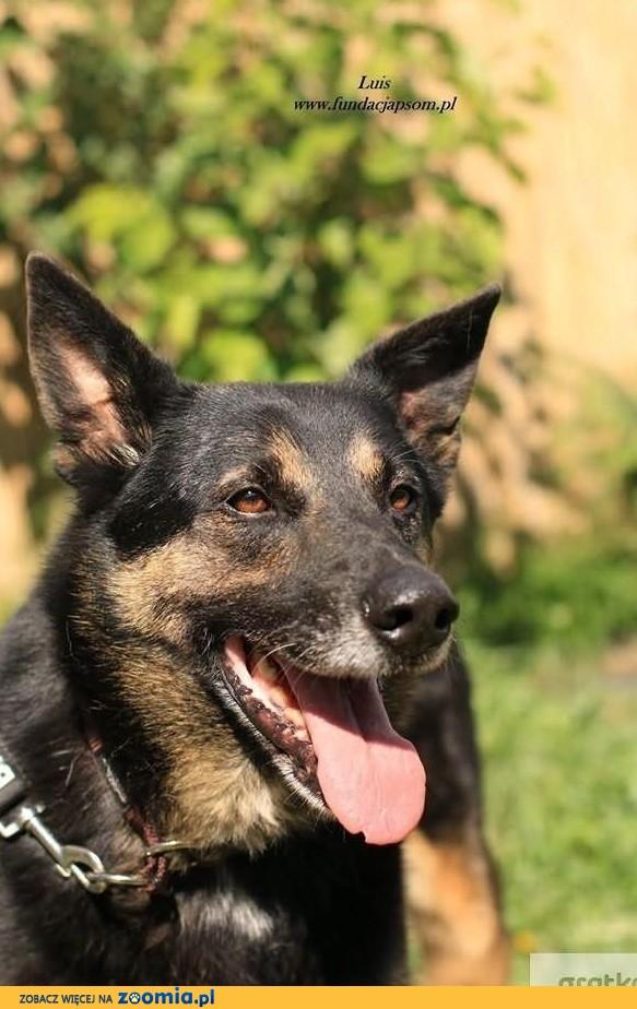 Luis- spokojny pies o pięknym spojrzeniu