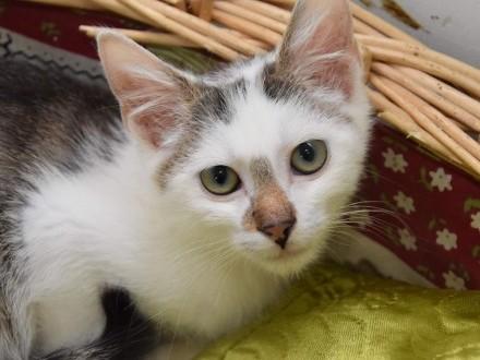 4-miesięczny kotek Leoś