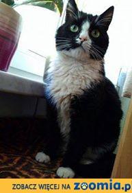 Bonifacy, młody i majestatyczny kot szuka pilnie domu!