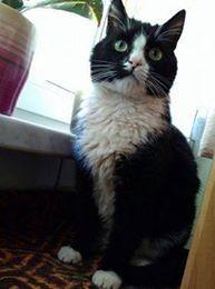 Bonifacy  młody i majestatyczny kot szuka pilnie domu!