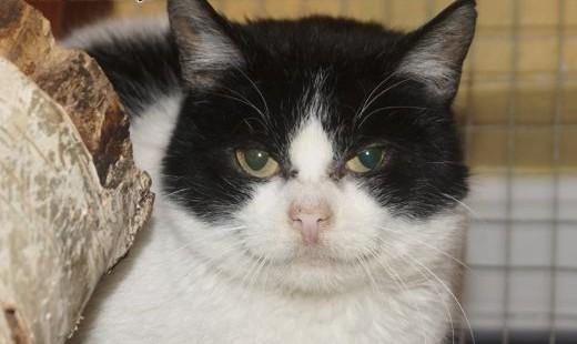 Megan  młoda kotka z pazurem szuka domu!   Koty pospolite cała Polska