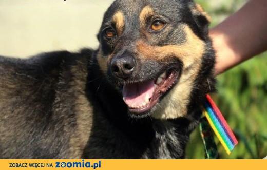 Śmieszek - zawsze uśmiechnięty pies,  mazowieckie Nowy Dwór Mazowiecki