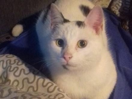 KOT: Dwukropek z Fundacji Miasto Kotów - zaufał wreszcie człowiekowi  może dasz mu dom?