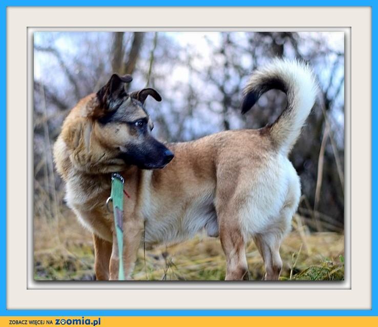 Mały 10 kg, czujny, towarzyski, aktywny piesek CHOJRAK_Adopcja_
