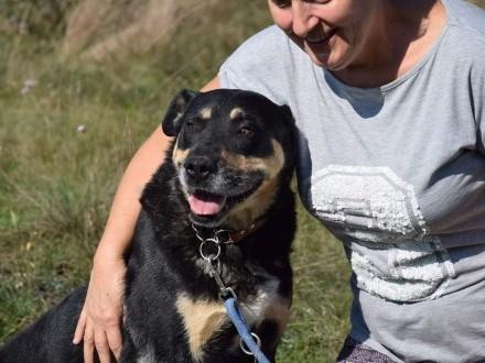 Ajk  grzeczny  dojrzały pies do adopcji