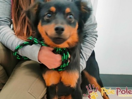 DREAMEK-Wesolutki radosny psiaczek szuka aktywnego domu  adopcja