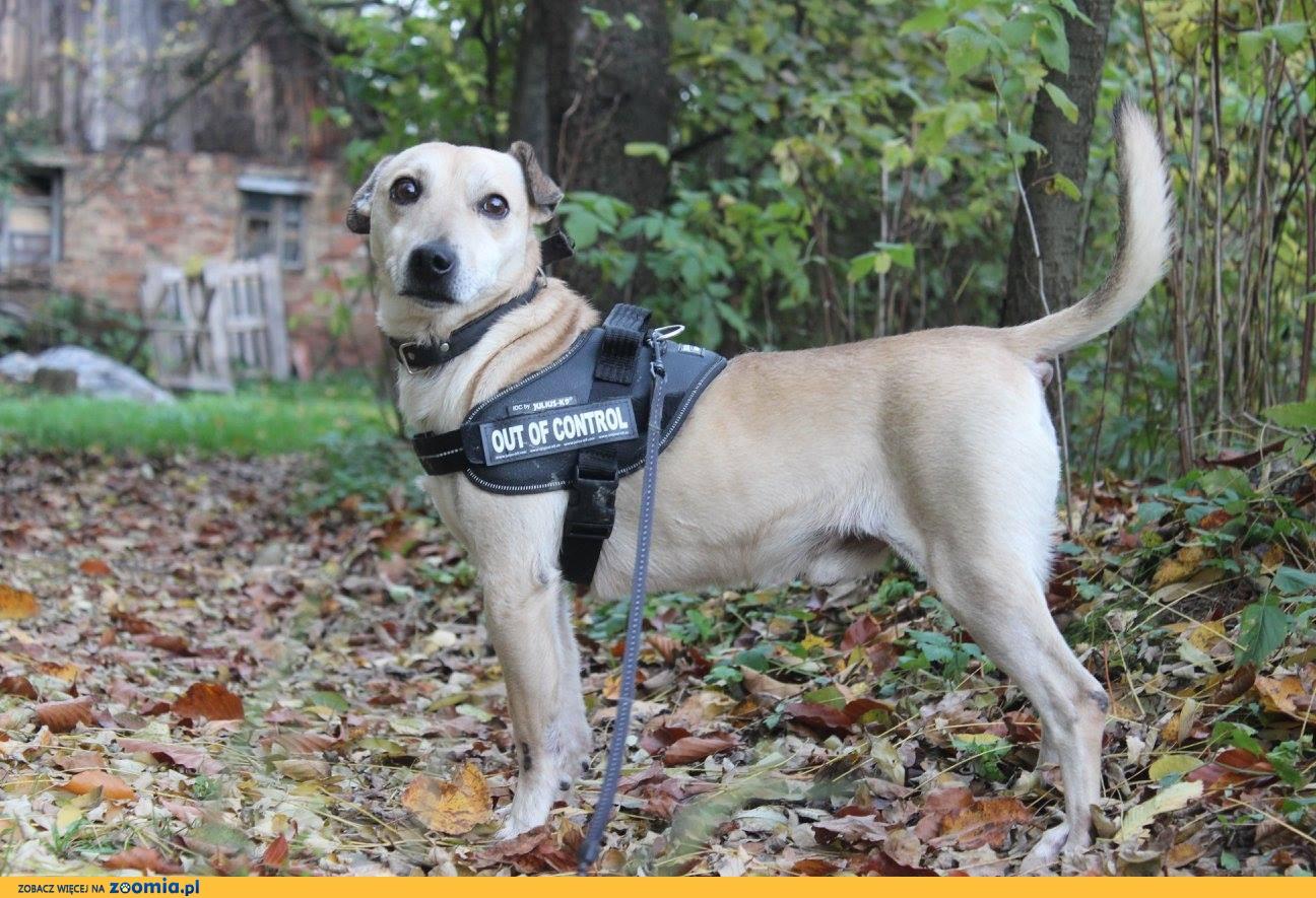 Rafik - mały, przyjacielski pies czeka na dom