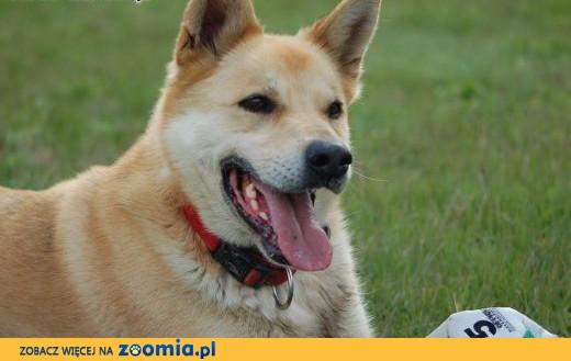 Diego - aktywny pies szuka aktywnego domu.,  Kundelki cała Polska