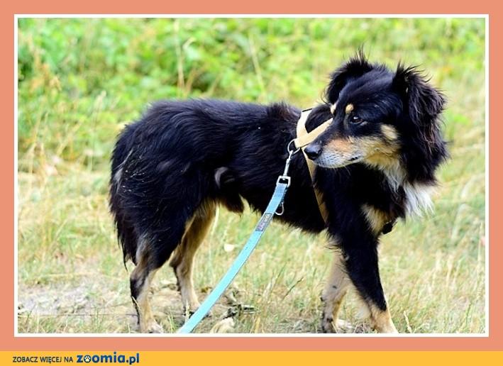 Nieduży 12 kg, łagodny, przytulaśny, spokojny psiak FAZI_Adopcja