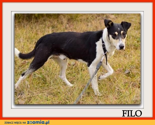 Średni,przyjazny,kontaktowy,aktywny,zaszczepiony psiak FILO_Adopcja