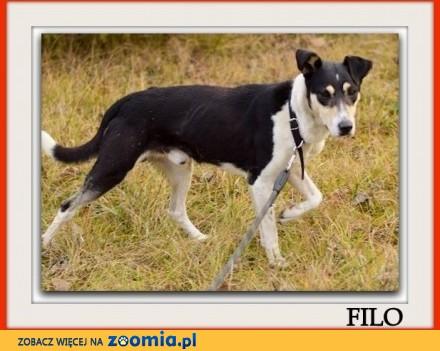 Średni przyjazny kontaktowy aktywny zaszczepiony psiak FILO_Adopcja