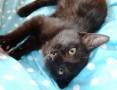 Lily - mała kotka spod wiaduktu