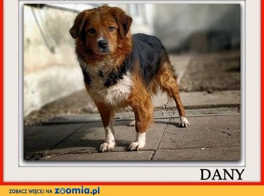 Do domu z ogrodem,średni 18 kg,przyjazny,świetny psiak DANY.Adopcja. ,  śląskie Katowice
