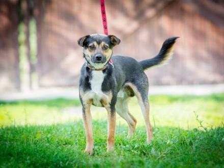Lolek, niewielki, delikatny psiak szuka kochającego domu!