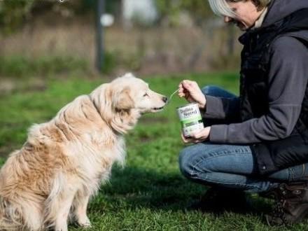 BUDYŃ - delikatne serce psa  co marzenie o domu ma!   małopolskie Kraków
