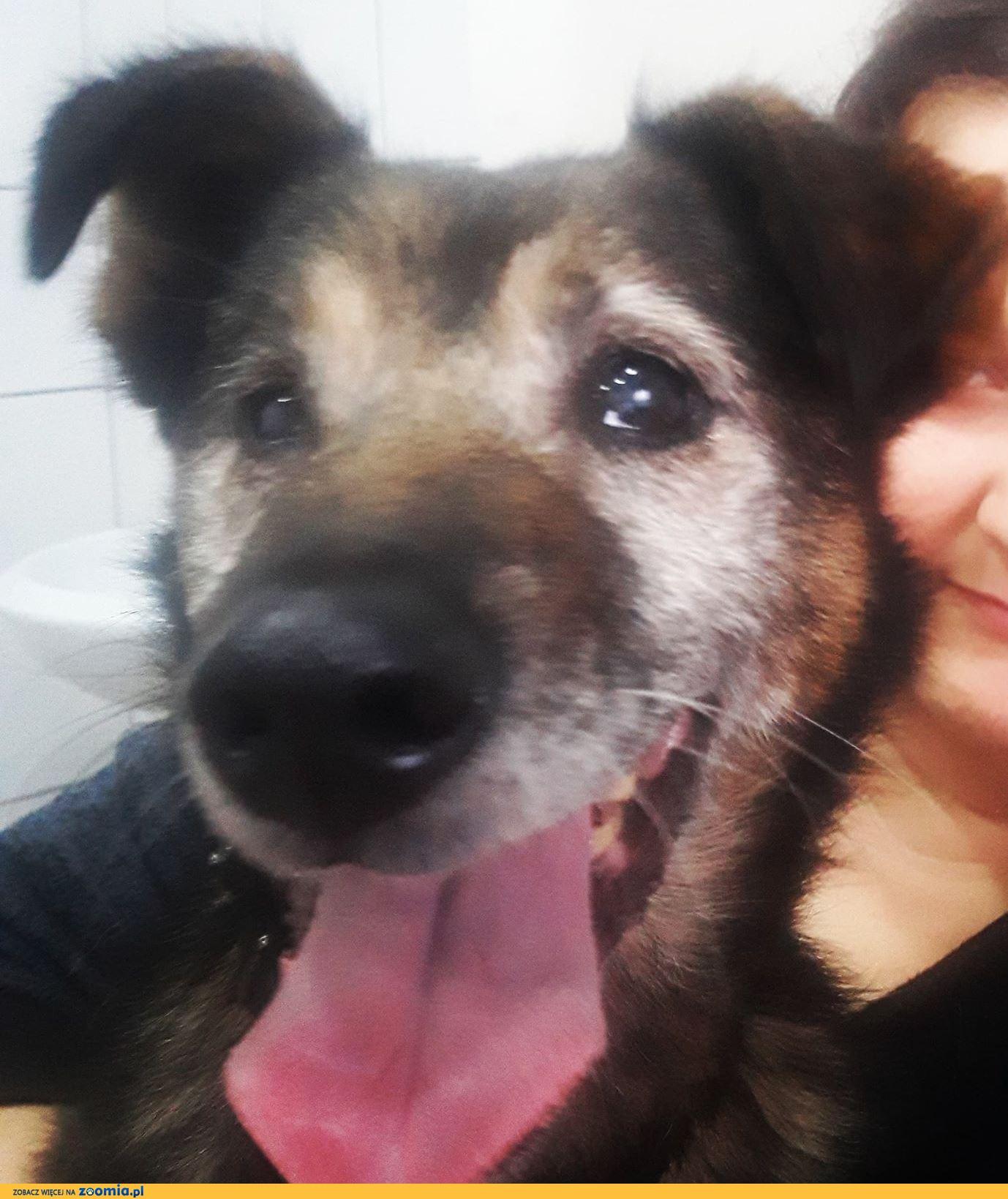 Henio, cudowny pies szuka spokojnego, kochającego domu!
