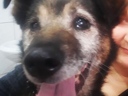 Henio  cudowny pies szuka spokojnego  kochającego domu!