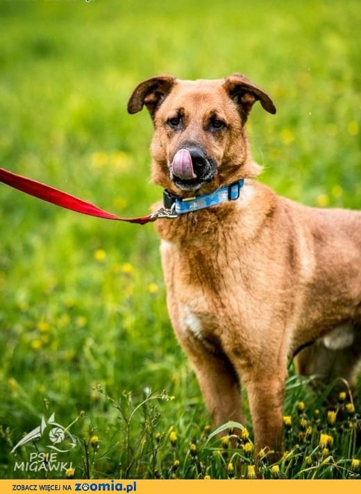 Pies o wielkim sercu - KORIN - szuka domu!,  mazowieckie Warszawa