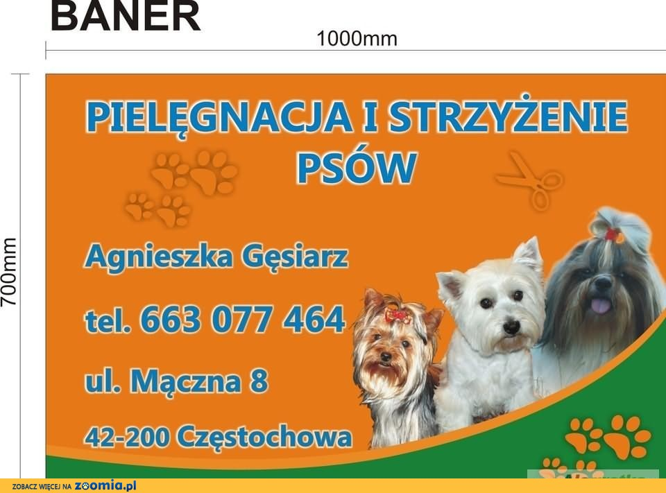 Psi Fryzjer Yorkshire Terrier Psy Archiwum Zoomia Pl