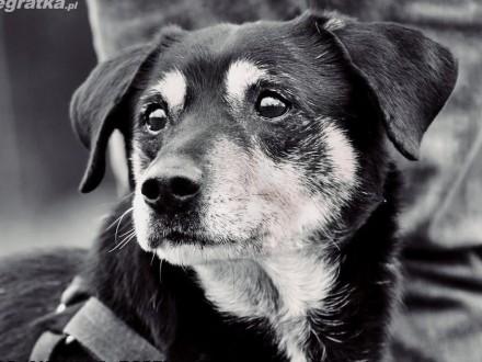 OTOZ Animals - Psi seniorzy - Franio - skryta dusza