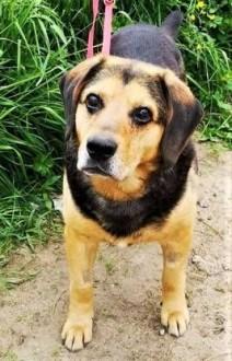 SAMI - kochany, spokojny psiak szuka dobrego domu,  mazowieckie Warszawa