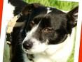 Do domu z ogródkiem,psiak PEPE, sympatyczny,przyjazny,łagodny_Adopcja_