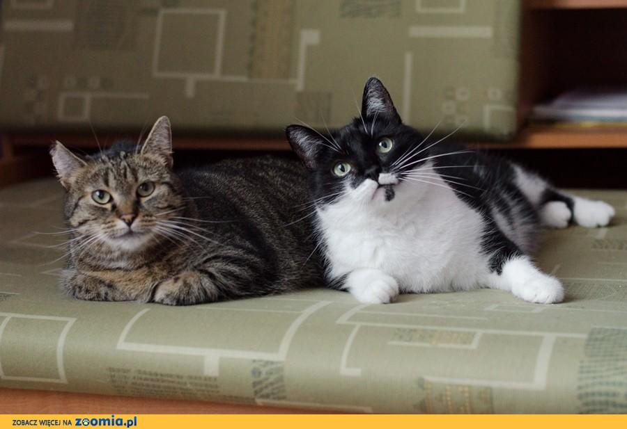Ich życie legło w gruzach! Dwa cudowne koty potrzebują domu