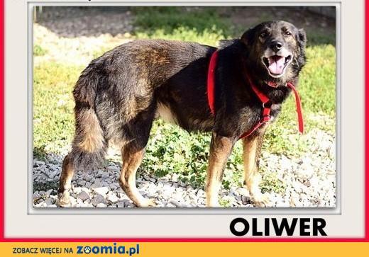 OLIWER,średni,przyjazny,spokojny,szczepiony piesek.ADOPCJA,  mazowieckie Warszawa