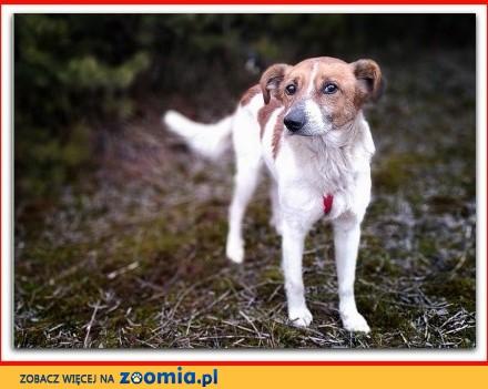 Super rodzinny psiak łagodny spokojny grzeczny szczepiony BODY_Adopcja_