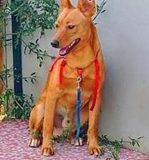 MIKUŚ – 2,5-letni, delikatny i wrażliwy psiak; szuka domu,  małopolskie Kraków