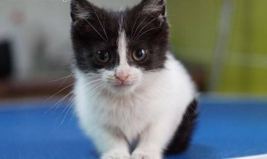 MILAGROS- 6tyg kotka do adopcji   świętokrzyskie Kielce