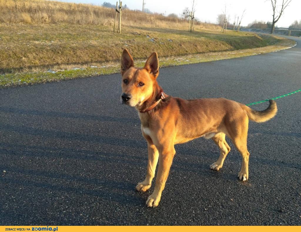 Wesoły, aktywny Fredzio, młody psiak szuka domu!