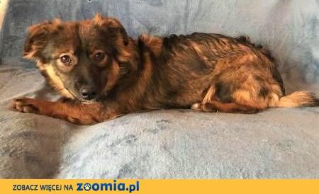 MISIA - 10 miesięczna szczeniaczka wyrzucona na śmietnik szuka domu,  mazowieckie Warszawa