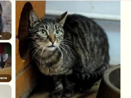 OLSZTYN: Malu  kotka FeLV+ po 6 latach kwarantanny szuka dobrego domu
